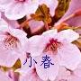 春に聞きた癒しのピアノBGM音楽なら癒しのピアノ「小春」CD
